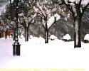 Pettorano e la neve